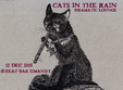 cats in the rain concert de dramatic lounge music